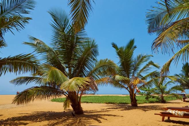 Palmen; Sonne; Strand; Sri Lanka