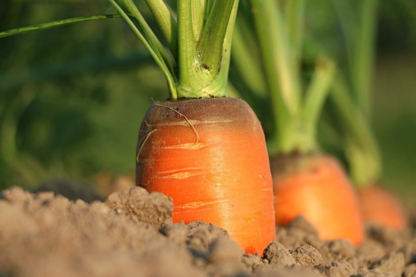 Heißgeliebte Süßkartoffel -Möhren-Suppe und alle frierentrotzdem!